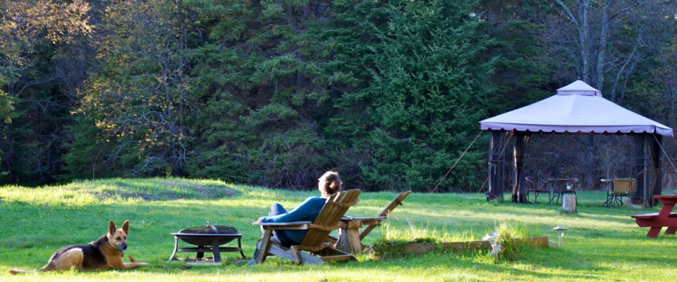 muskoka chair meadow, header
