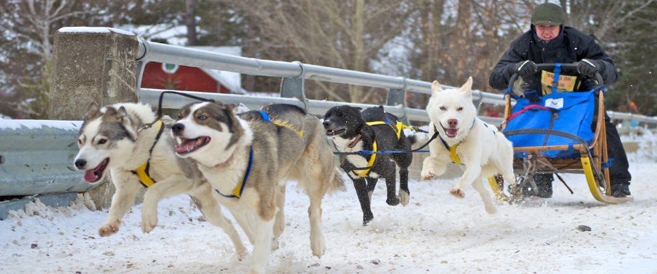 dog sledding, guided dog sled tours